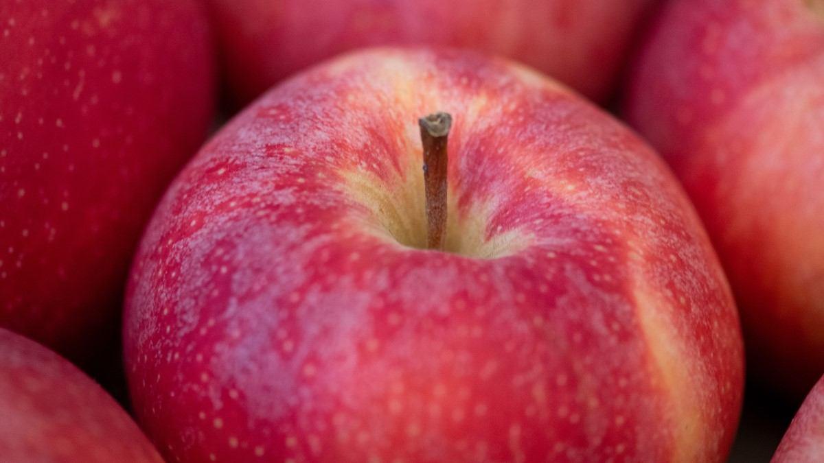 Gör din egen äppelmust