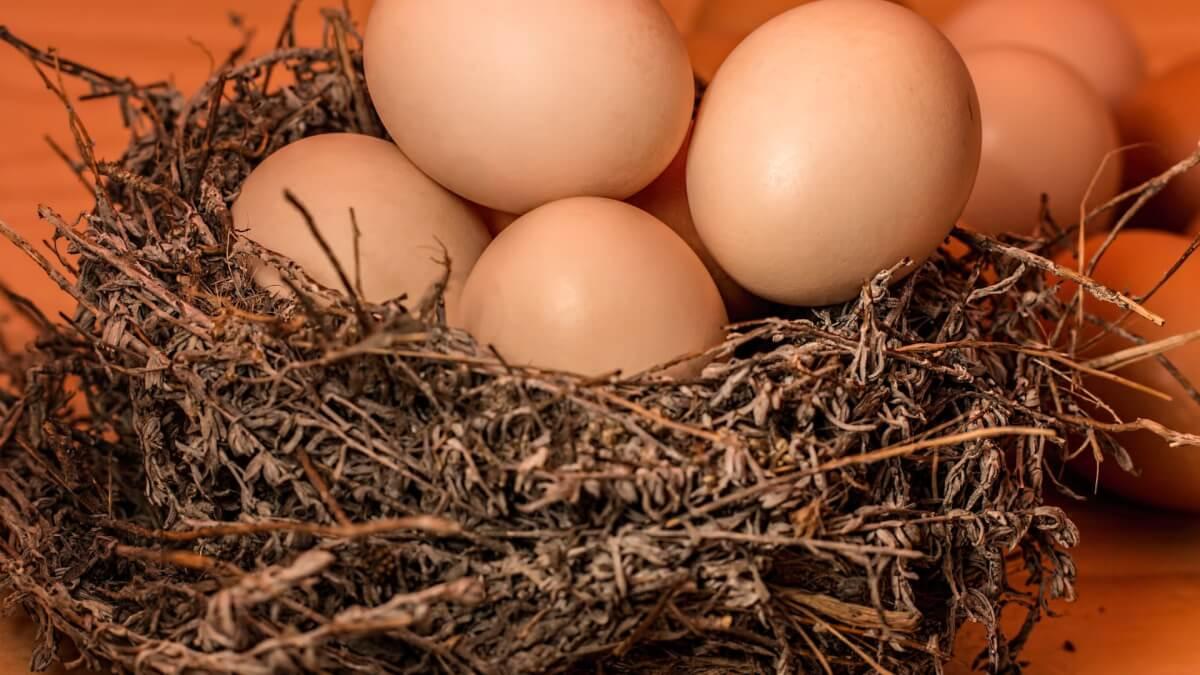 Äggkläckningsmaskin bäst i test