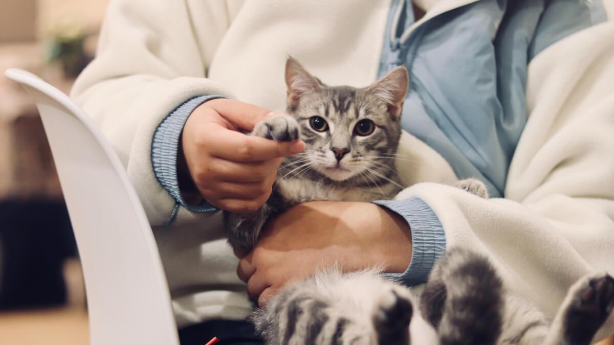 Bästa kattförsäkringen