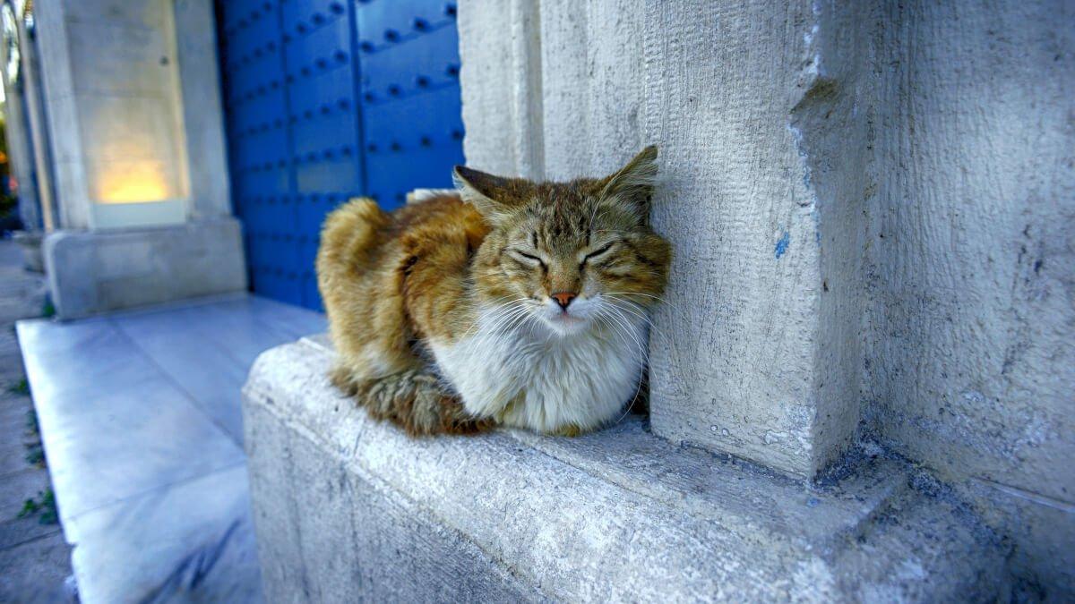 Bästa kattluckan