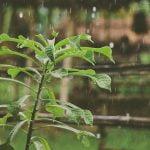 Bästa regntunnan 2021 - spara vatten genom att investera i en bra regntunna!