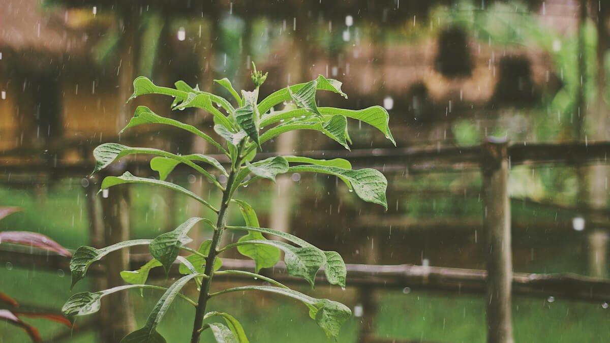 Bästa regntunnan