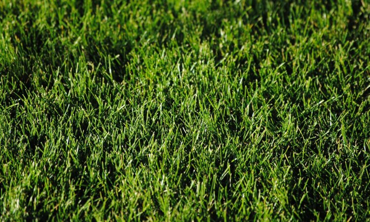 Bästa vertikalskärare - grön gräsmatta