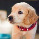 Bilbälte hund bäst i test 2021 - hitta det bästa hundbilbältet!