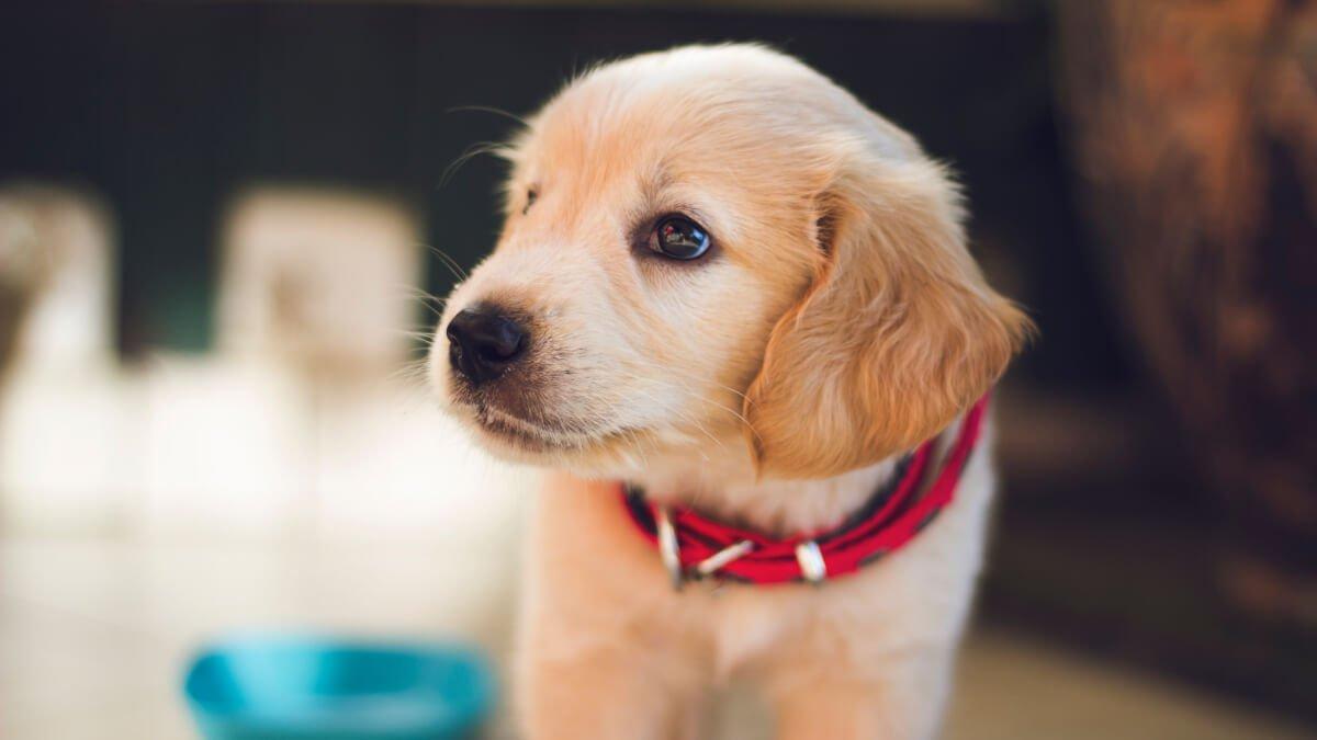 Bilbälte hund bäst i test