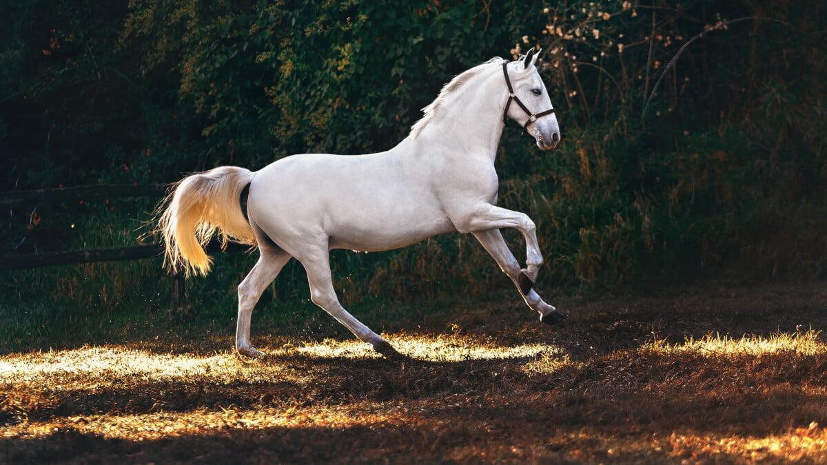 Nyponpulver häst & hund